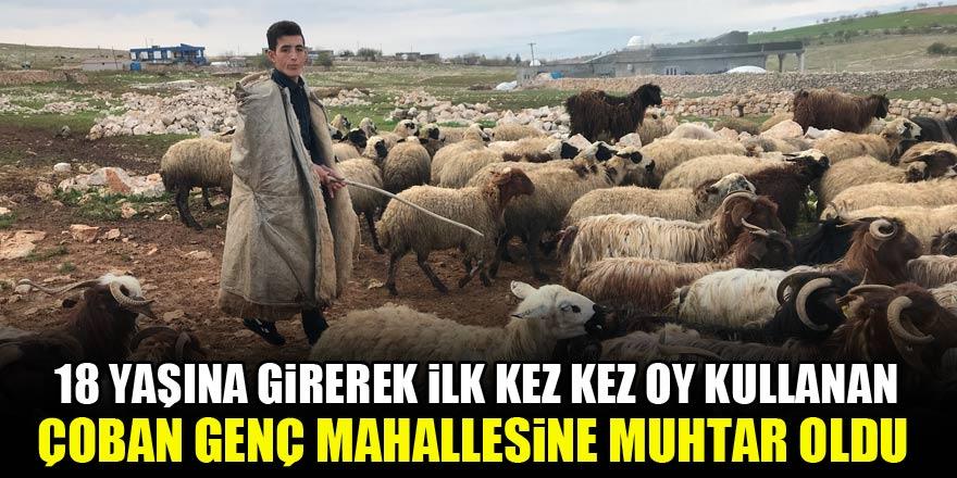 18 yaşına girerek ilk kez oy kullanan çoban genç mahallesine muhtar oldu 1