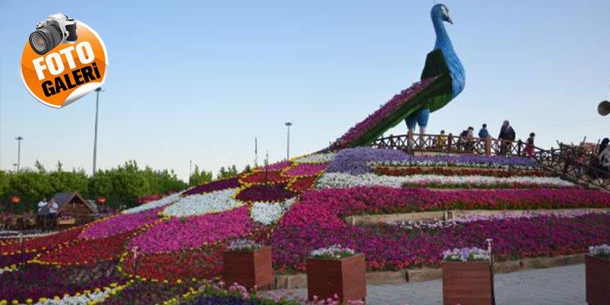 Konya'da 500 bin bitkinin bulunduğu rengarenk bahçeye ziyaretçi akı