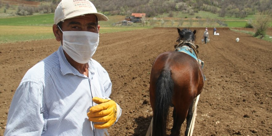"""Konya'da çiftçilerin """"atlı eşekli"""" fasulye ekimi mesaisi"""