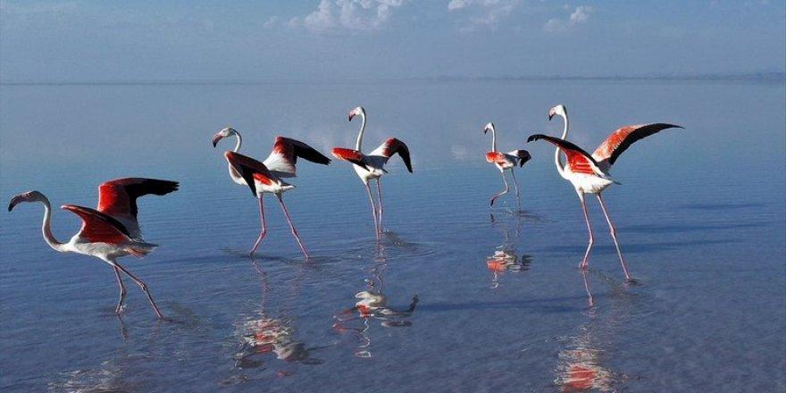 Flamingoların yaşam cenneti Tuz Gölü'ndeki görsel şöleni