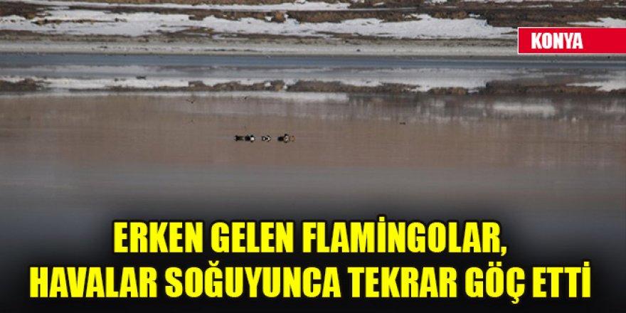 Erken gelen flamingolar, havalar soğuyunca tekrar göç etti