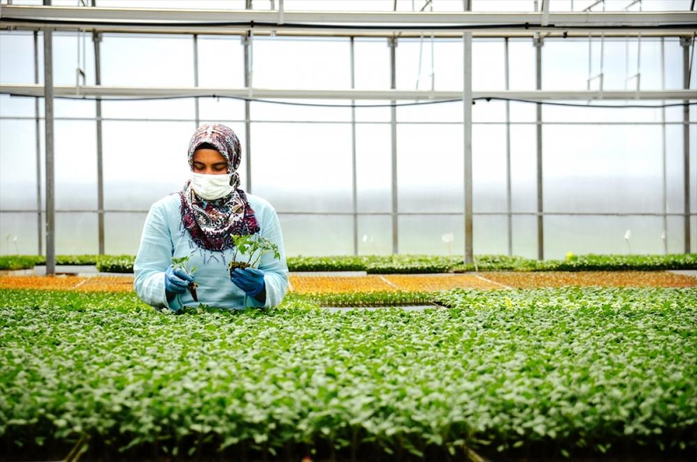 """Konya'da sebze üreticisi iklime uygun fideyle pazara """"erken"""" giriyor 1"""