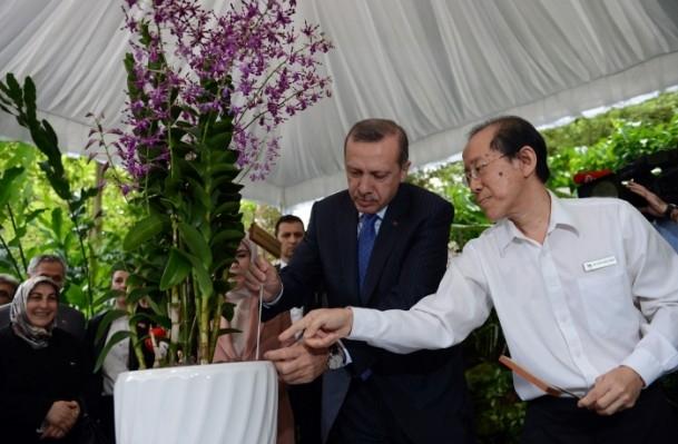 Başbakan Erdoğan ve eşinin ismi orkideye verildi 2