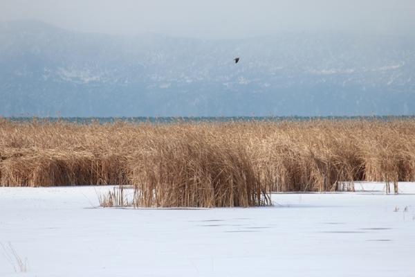 Dondurucu soğuğa rağmen avlanıyorlar 11