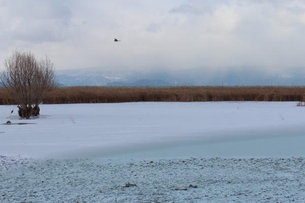 Dondurucu soğuğa rağmen avlanıyorlar 12