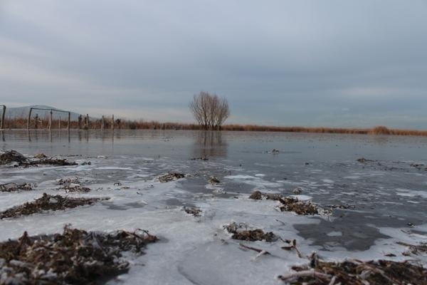 Dondurucu soğuğa rağmen avlanıyorlar 5