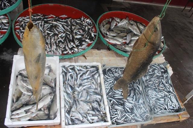 Beyşehirli balıkçıları şimdi de sisli hava vurdu 7