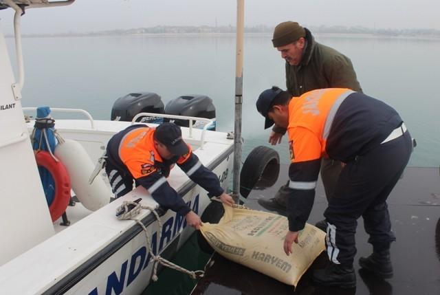 Jandarma Beyşehir Gölü adasındaki yabani tavşanlara yem bıraktı 1