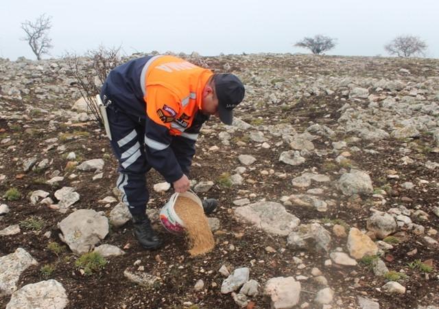 Jandarma Beyşehir Gölü adasındaki yabani tavşanlara yem bıraktı 4