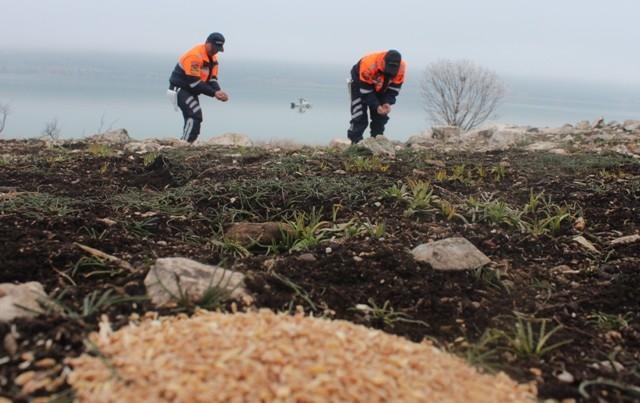 Jandarma Beyşehir Gölü adasındaki yabani tavşanlara yem bıraktı 7