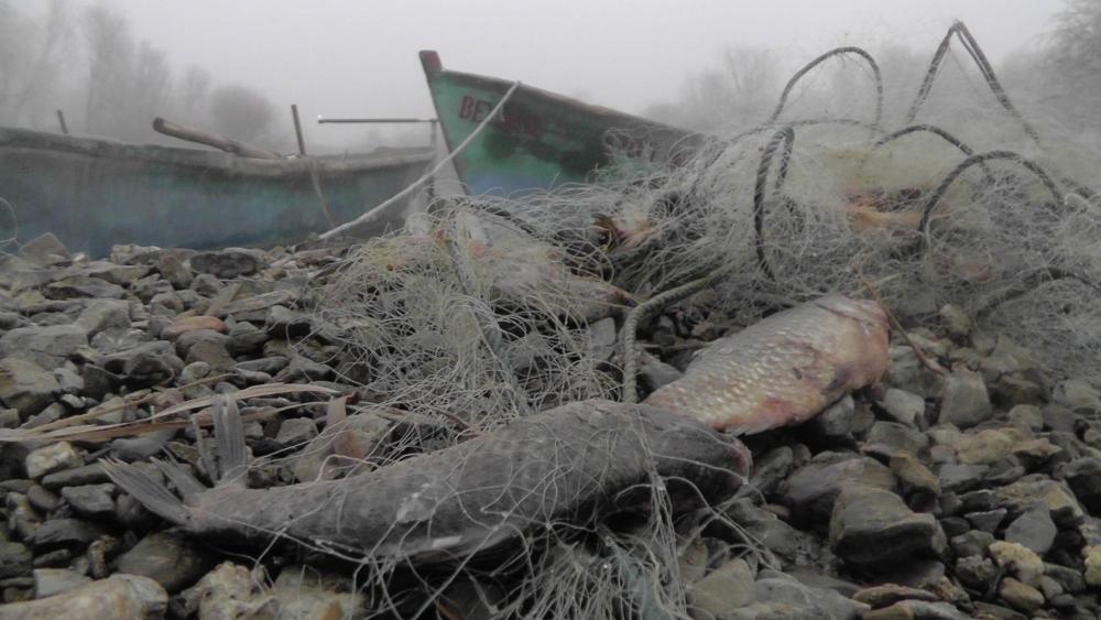 Beyşehir Gölü'nden geçen yıl 225 ton balık çıktı 3