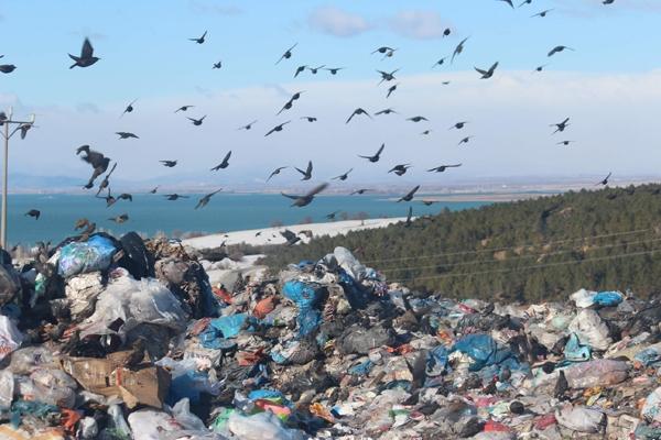 Kuşlar ve sokak hayvanlarının çöplükte yaşam mücadelesi 1