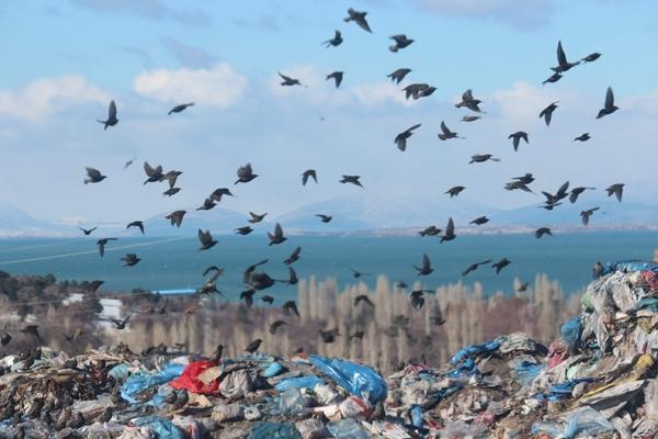 Kuşlar ve sokak hayvanlarının çöplükte yaşam mücadelesi 2