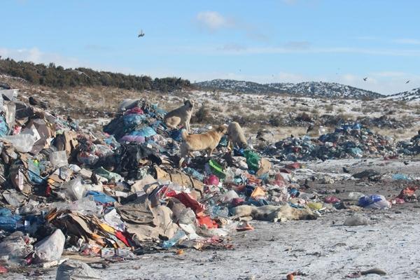 Kuşlar ve sokak hayvanlarının çöplükte yaşam mücadelesi 4