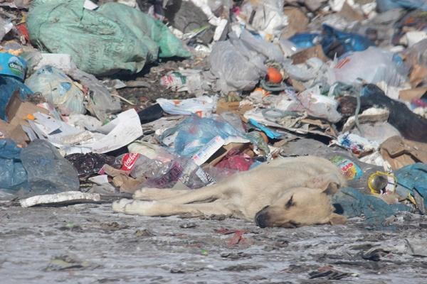 Kuşlar ve sokak hayvanlarının çöplükte yaşam mücadelesi 6