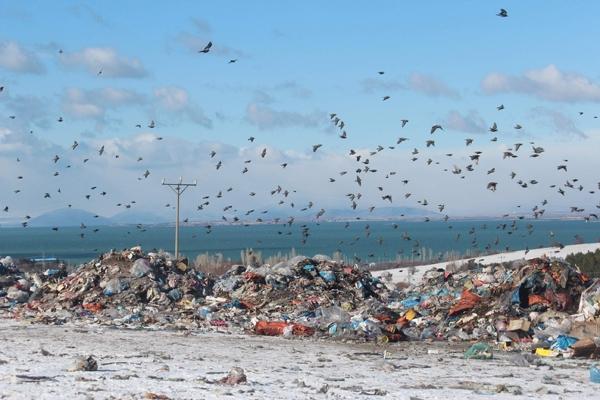 Kuşlar ve sokak hayvanlarının çöplükte yaşam mücadelesi 7