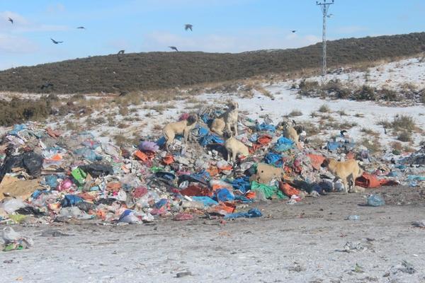 Kuşlar ve sokak hayvanlarının çöplükte yaşam mücadelesi 9