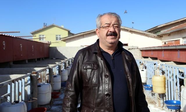 Konya'da bir inek üçüz buzağı doğurdu 6
