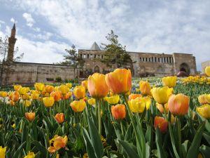 """Konya'da """"Lale Mevsimi"""" Bir Başkadır"""