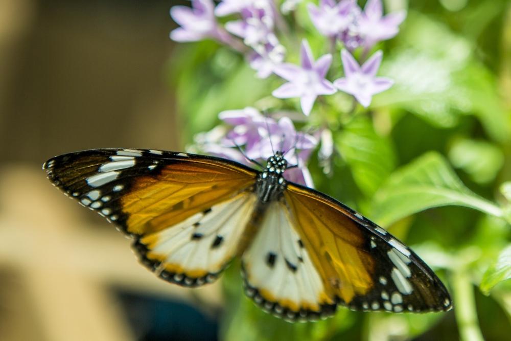 Konya Tropikal Kelebek Bahçesi 1