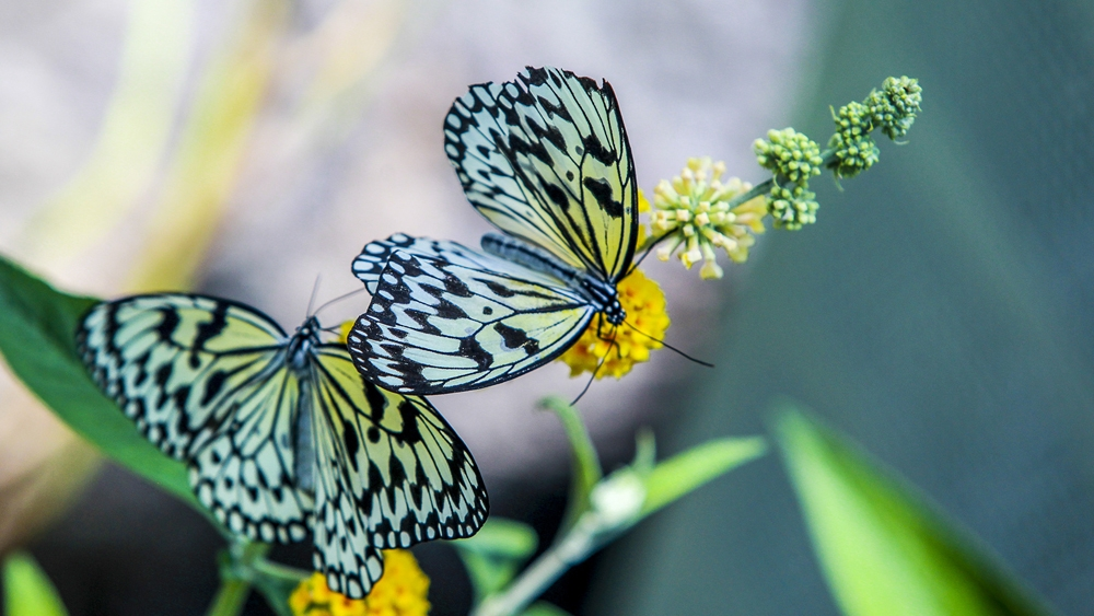 Konya Tropikal Kelebek Bahçesi 10