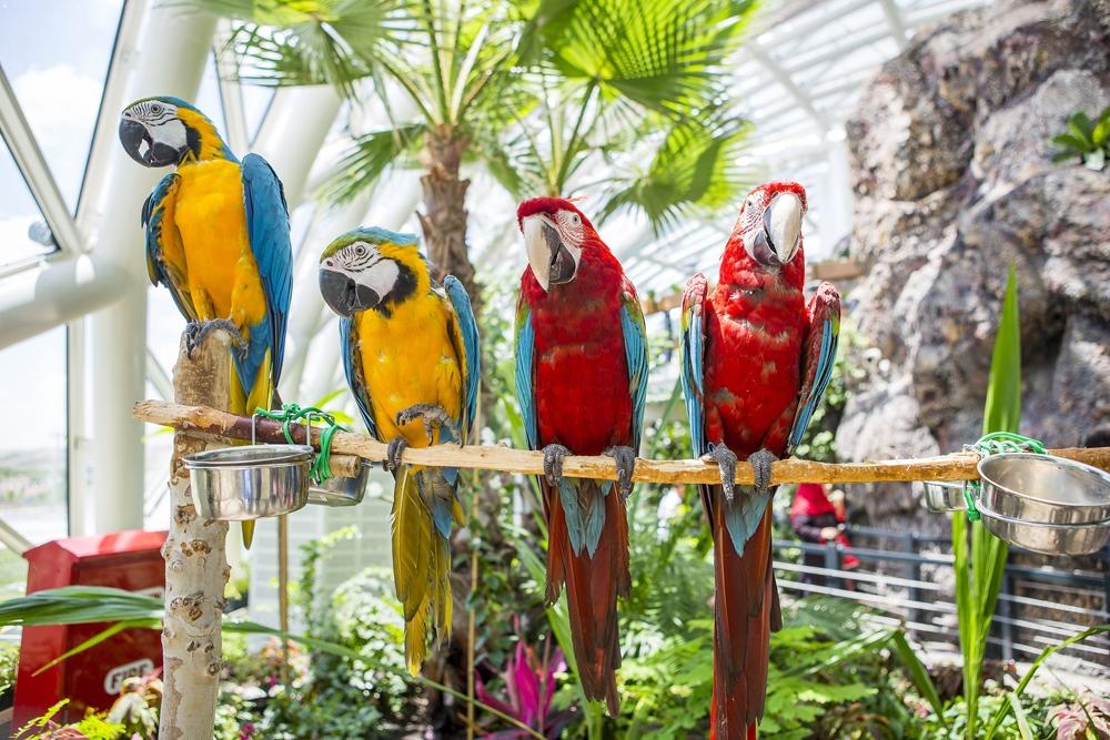 Konya Tropikal Kelebek Bahçesi 12