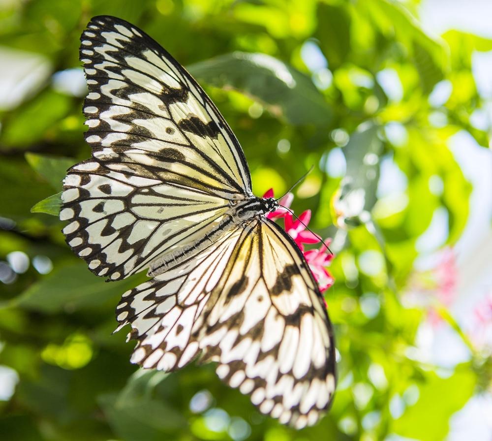 Konya Tropikal Kelebek Bahçesi 2