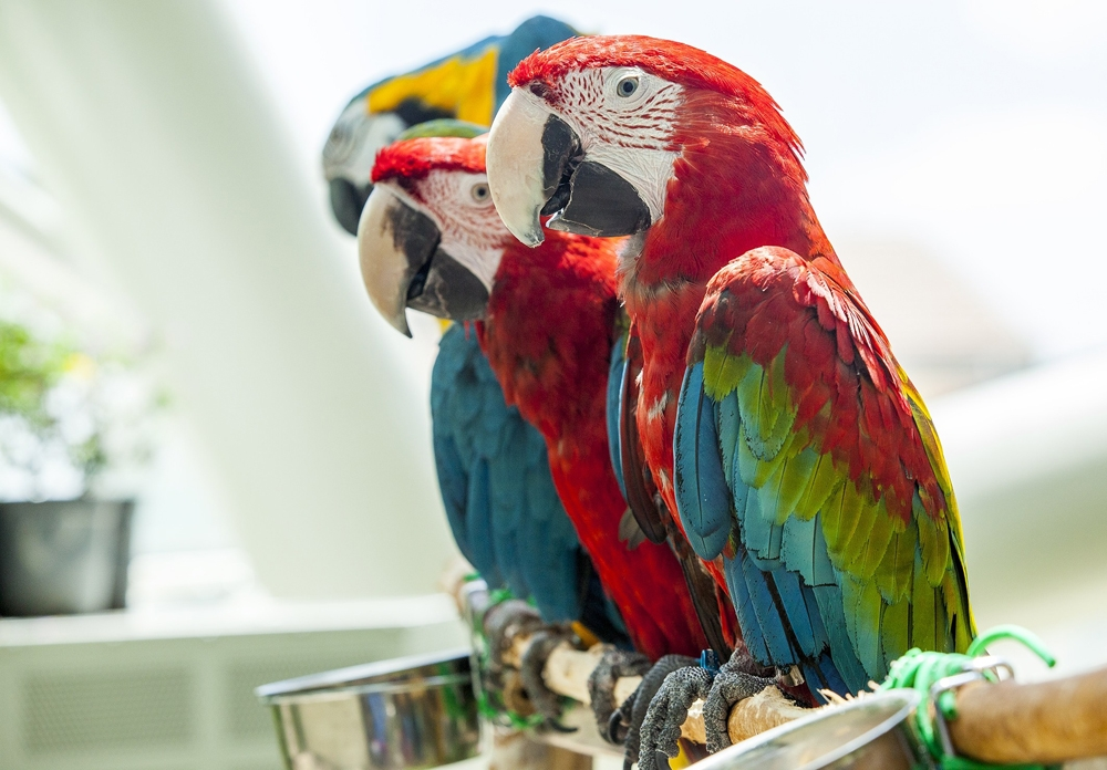 Konya Tropikal Kelebek Bahçesi 23