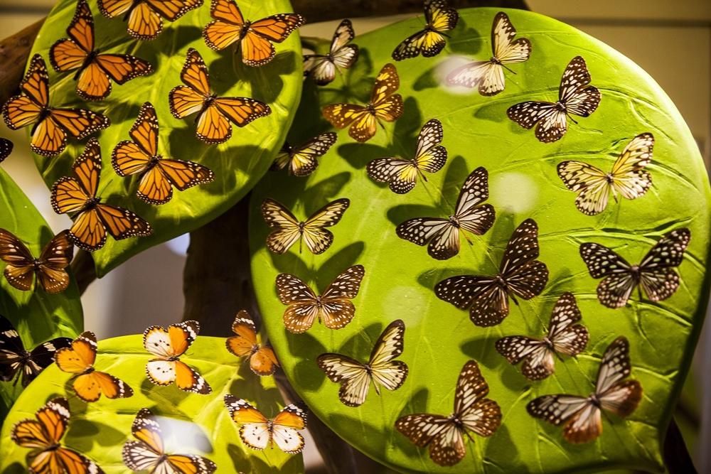 Konya Tropikal Kelebek Bahçesi 25