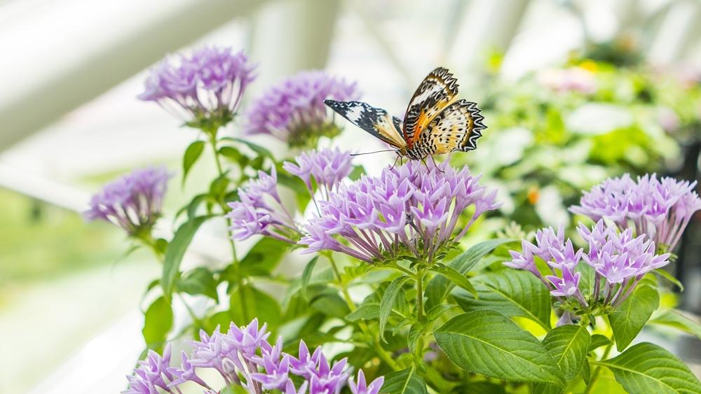 Konya Tropikal Kelebek Bahçesi 3