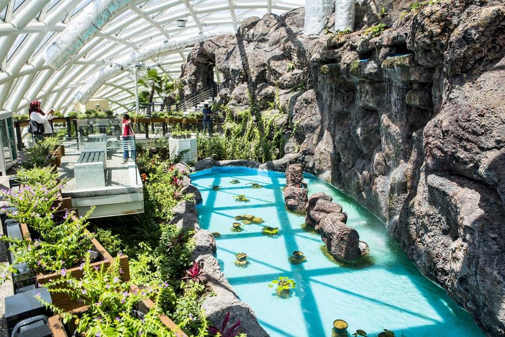 Konya Tropikal Kelebek Bahçesi 4