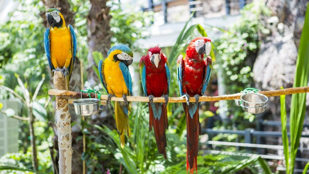 Konya Tropikal Kelebek Bahçesi 7