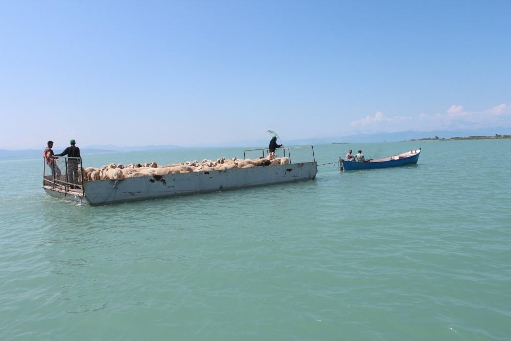 Koyun sürüleri salla adaya taşınıyor 15