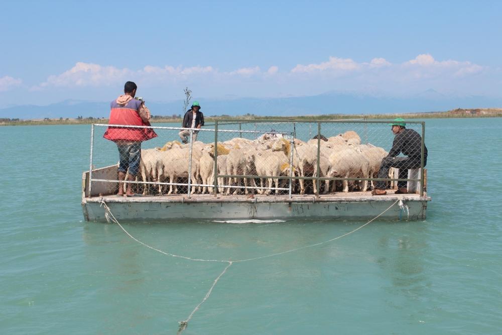 Koyun sürüleri salla adaya taşınıyor 18