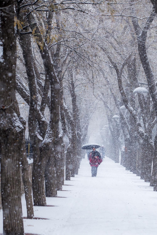 Konya'da kar yağışı 10