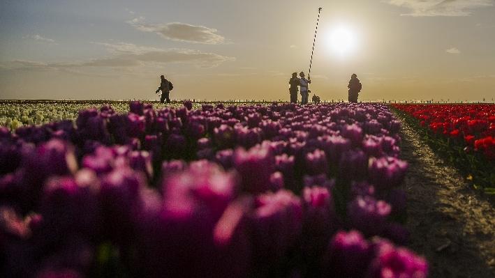 Konya'da fotoğraf stüdyosu gibi lale tarlaları 23