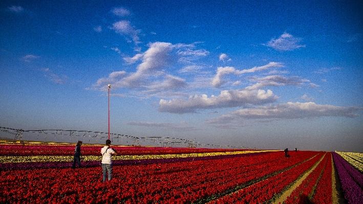 Konya'da fotoğraf stüdyosu gibi lale tarlaları 26
