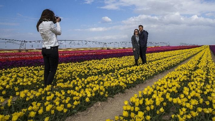 Konya'da fotoğraf stüdyosu gibi lale tarlaları 29