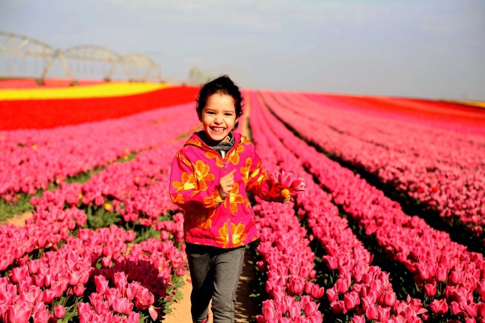 Konya'da fotoğraf stüdyosu gibi lale tarlaları 5