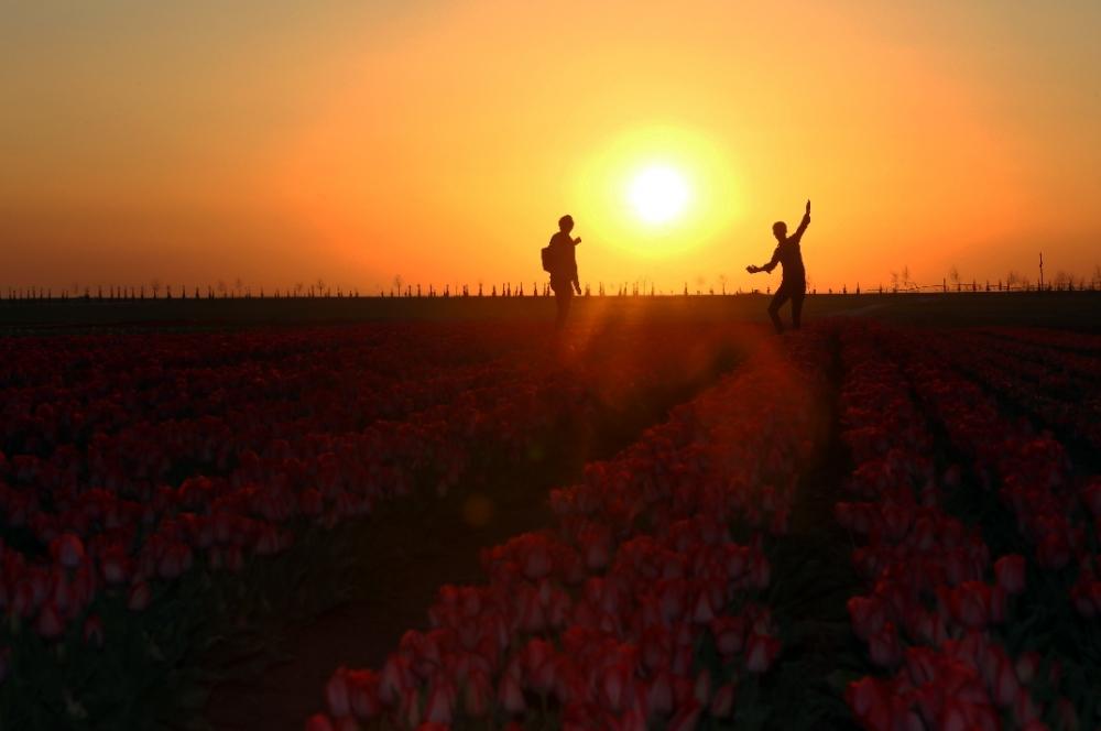 Konya'da fotoğraf stüdyosu gibi lale tarlaları 6
