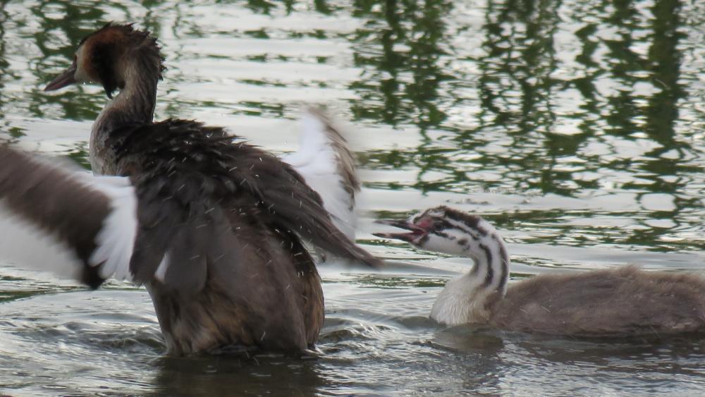 Yavru kuşların büyüdüğü kuş cenneti ilgi odağı 11