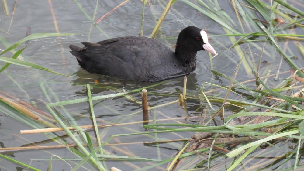 Yavru kuşların büyüdüğü kuş cenneti ilgi odağı 2