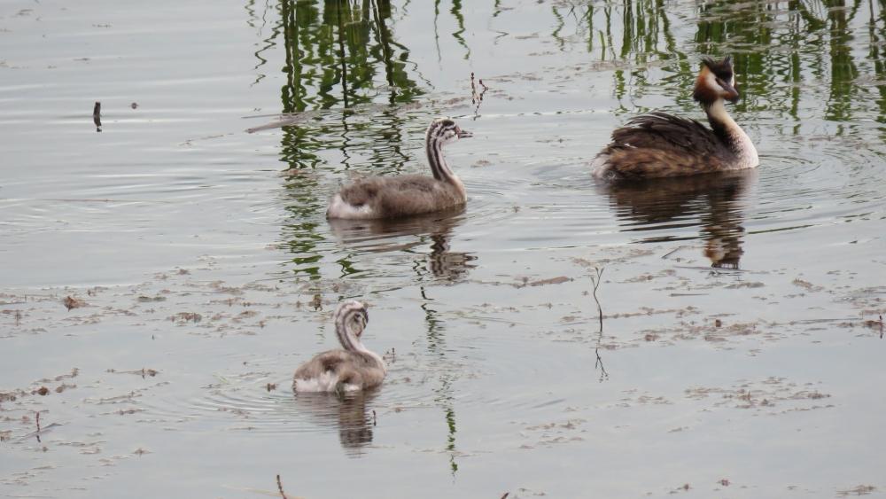 Yavru kuşların büyüdüğü kuş cenneti ilgi odağı 7