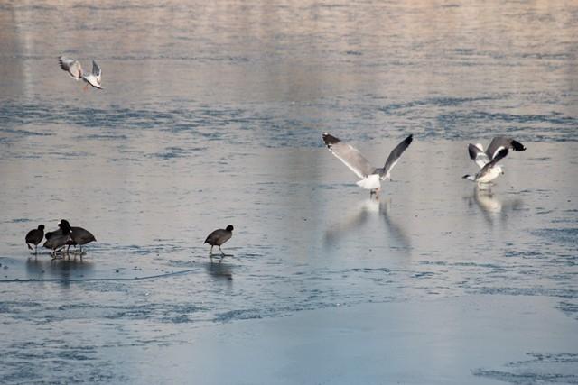 Beyşehir Gölü beyaz gelinliğini giydi 7