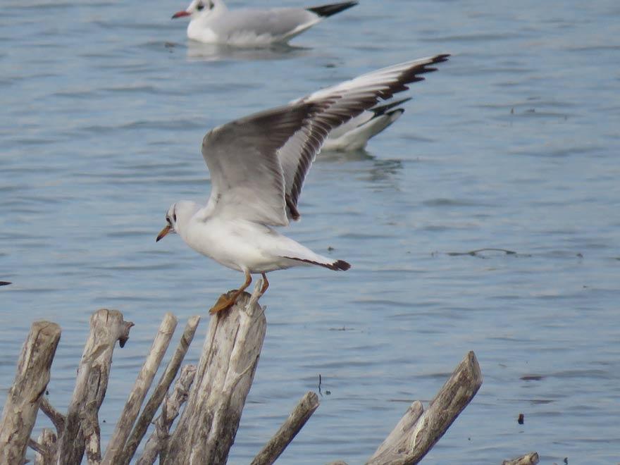 Beyşehir Gölü'ne fotoğrafçı ilgisi 1