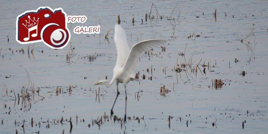 Beyşehir Gölü'ne fotoğrafçı ilgisi