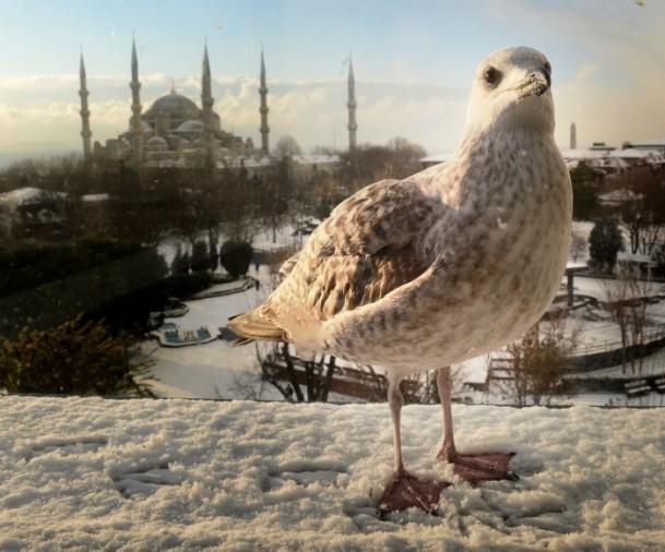 2013 Anadolu Ajansı Yılın Fotoğrafları Yarışması sonuçlandı 7