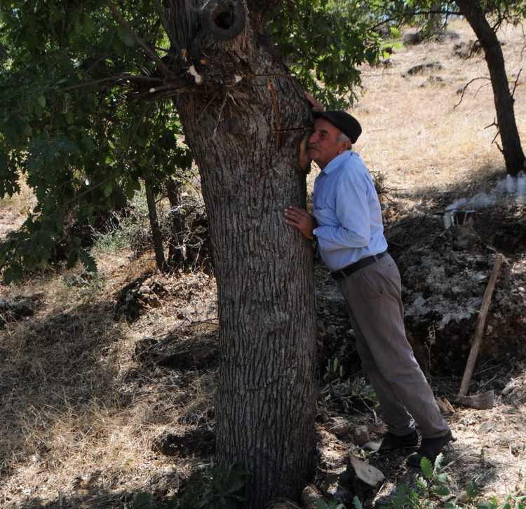 40 yıldır ağaçları dinliyor! Kilosunu 500 TL'ye satıyor 15