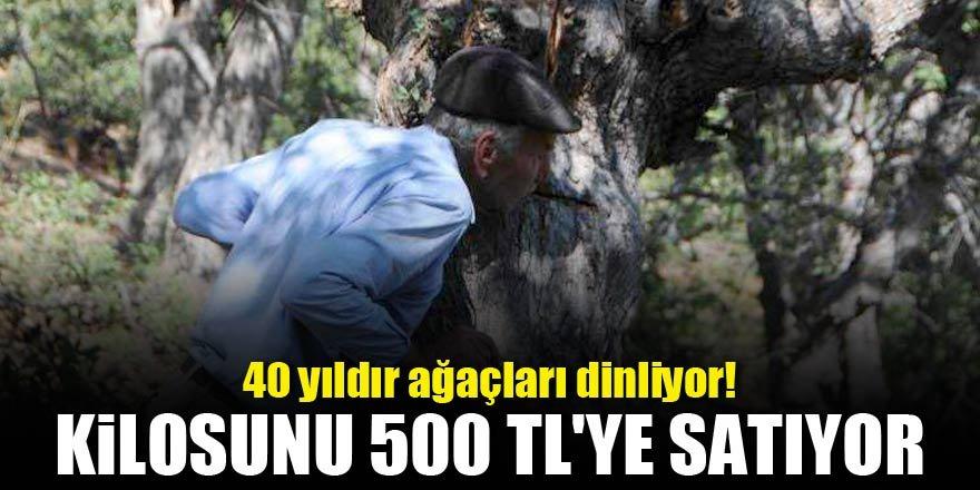 40 yıldır ağaçları dinliyor! Kilosunu 500 TL'ye satıyor
