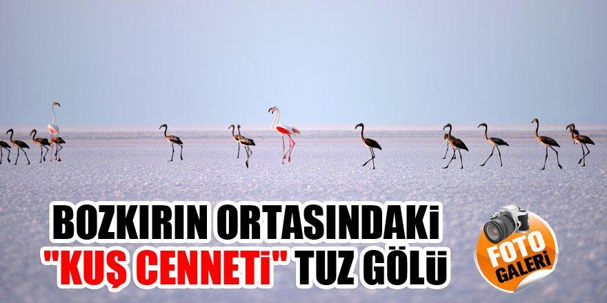 """Bozkırın ortasındaki """"kuş cenneti"""" Tuz Gölü"""